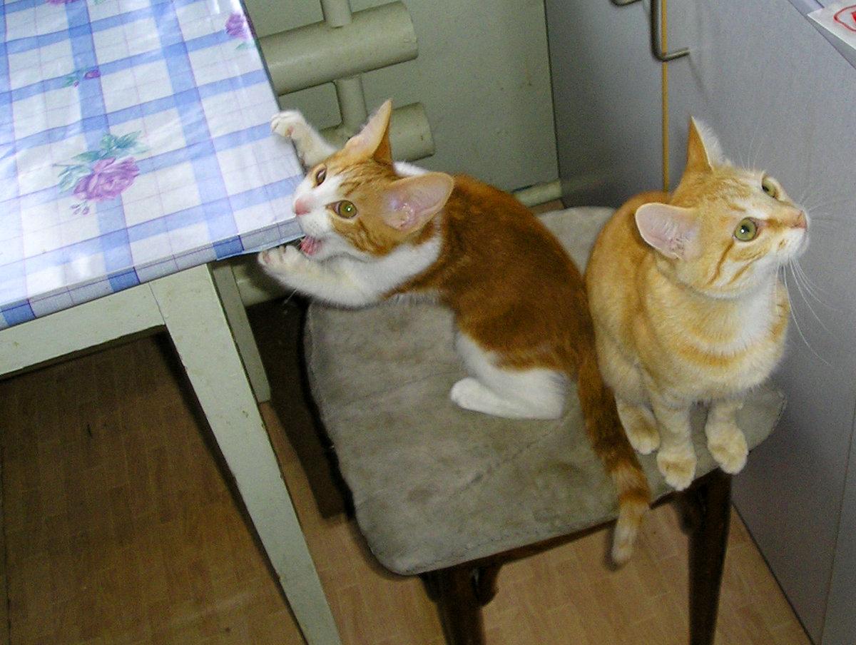 Смешные картинки голодный кот