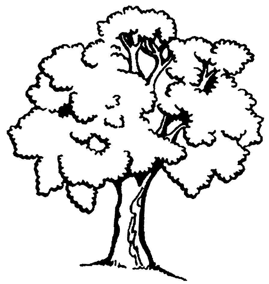 Дерево картинки раскраска