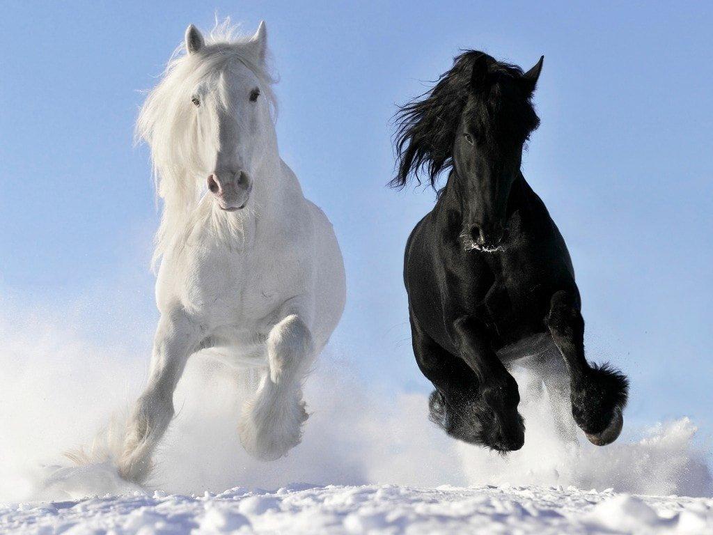 Картинка лошадей в высоком качестве, открытки