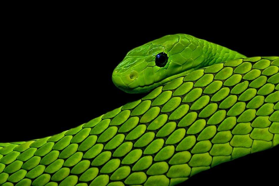 зеленая мамба цвет