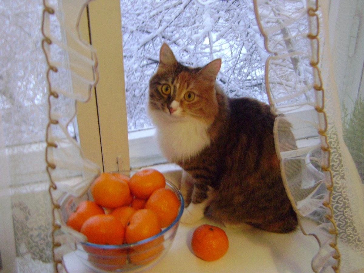 Зима пришла...#домашние_любимцы #кошка #питомцы #NATAАлиска,  16.12.2015