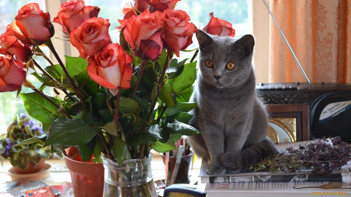 Кошки и цветы картинки
