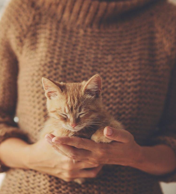 Картинки девушка держит котика
