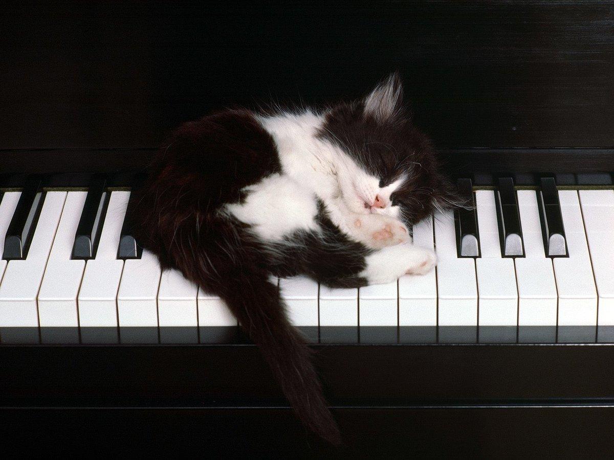 Прикольные картинки пианистов