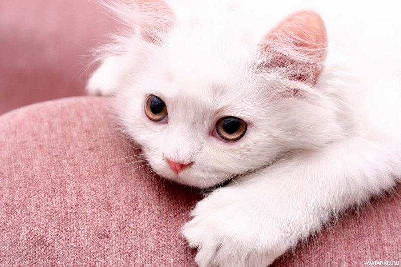 Картинка с надписью котеночек видеооператоры свою