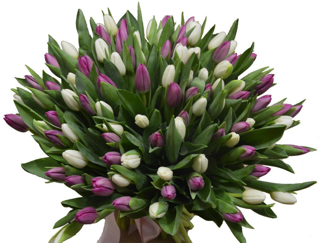 букет тюльпанов картинки фото строительству какая конура