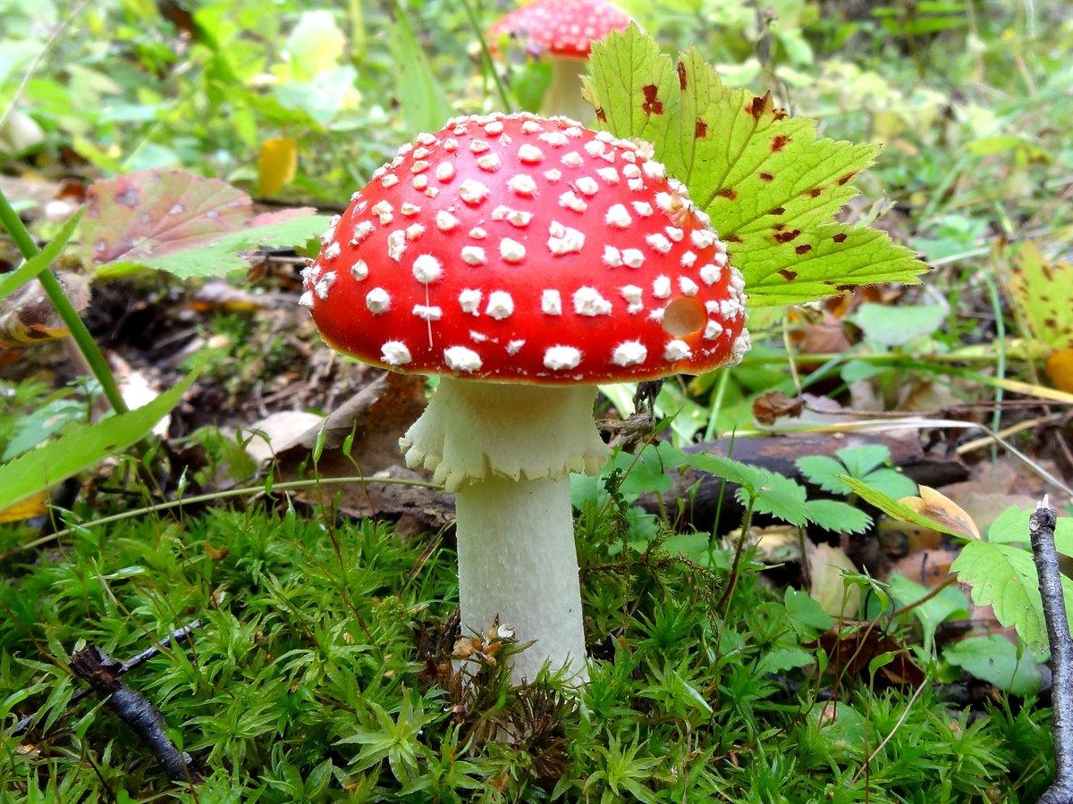 Фото несъедобные грибы архангельской области