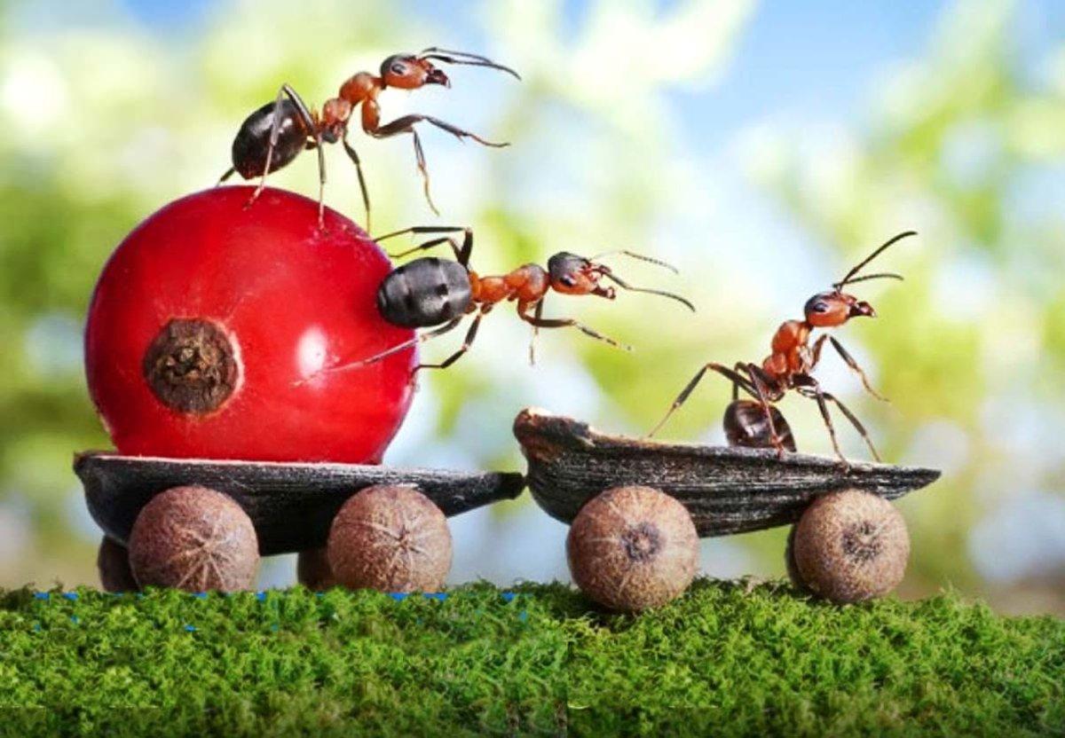 Днем, прикольные картинки муравья