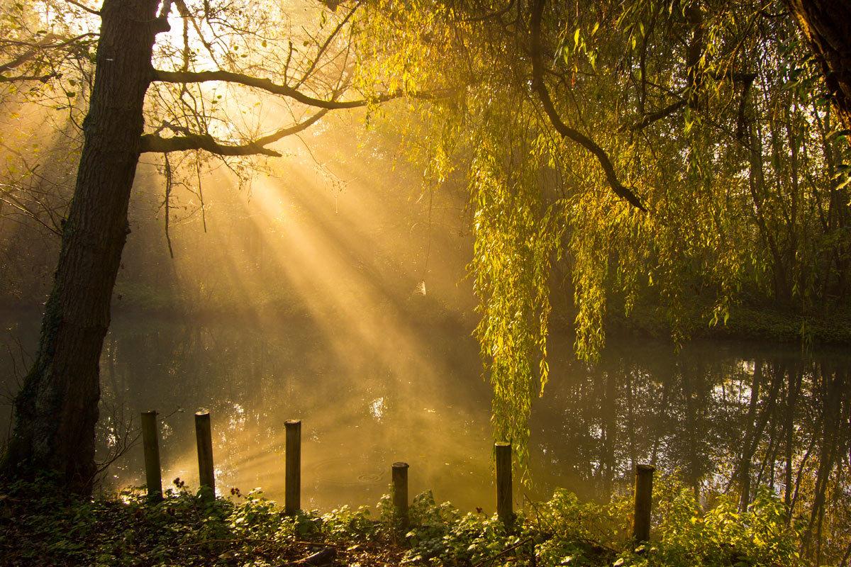 этому фото с солнечными лучами утреннего света волнение