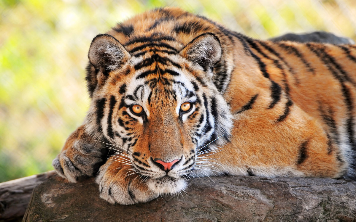 Смотреть картинки животные красивые, открытка
