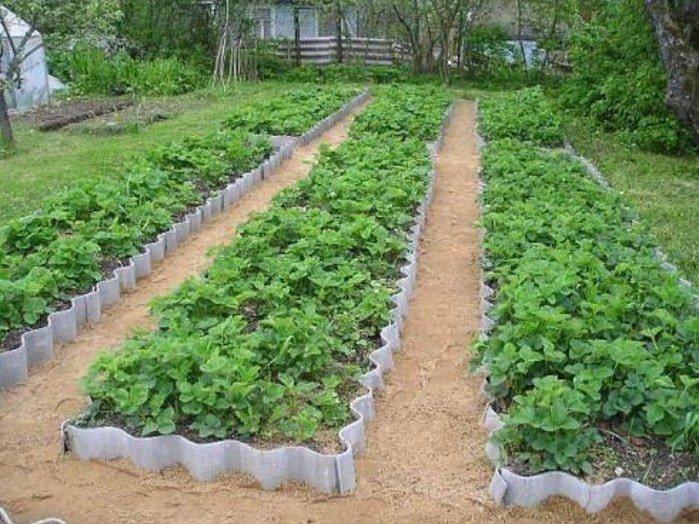 грядки на огороде из шифера фото немного вверх тропе