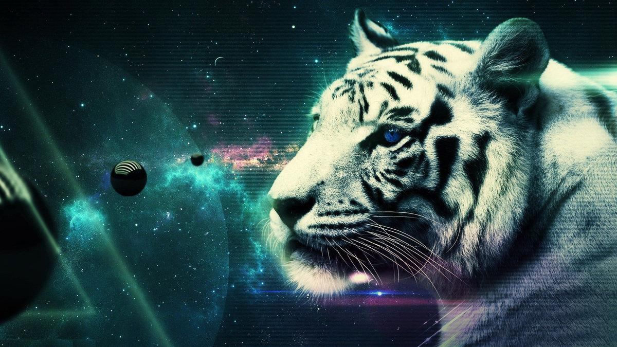 White Tiger Hd Desktop Wallpaper Wallpapersafari
