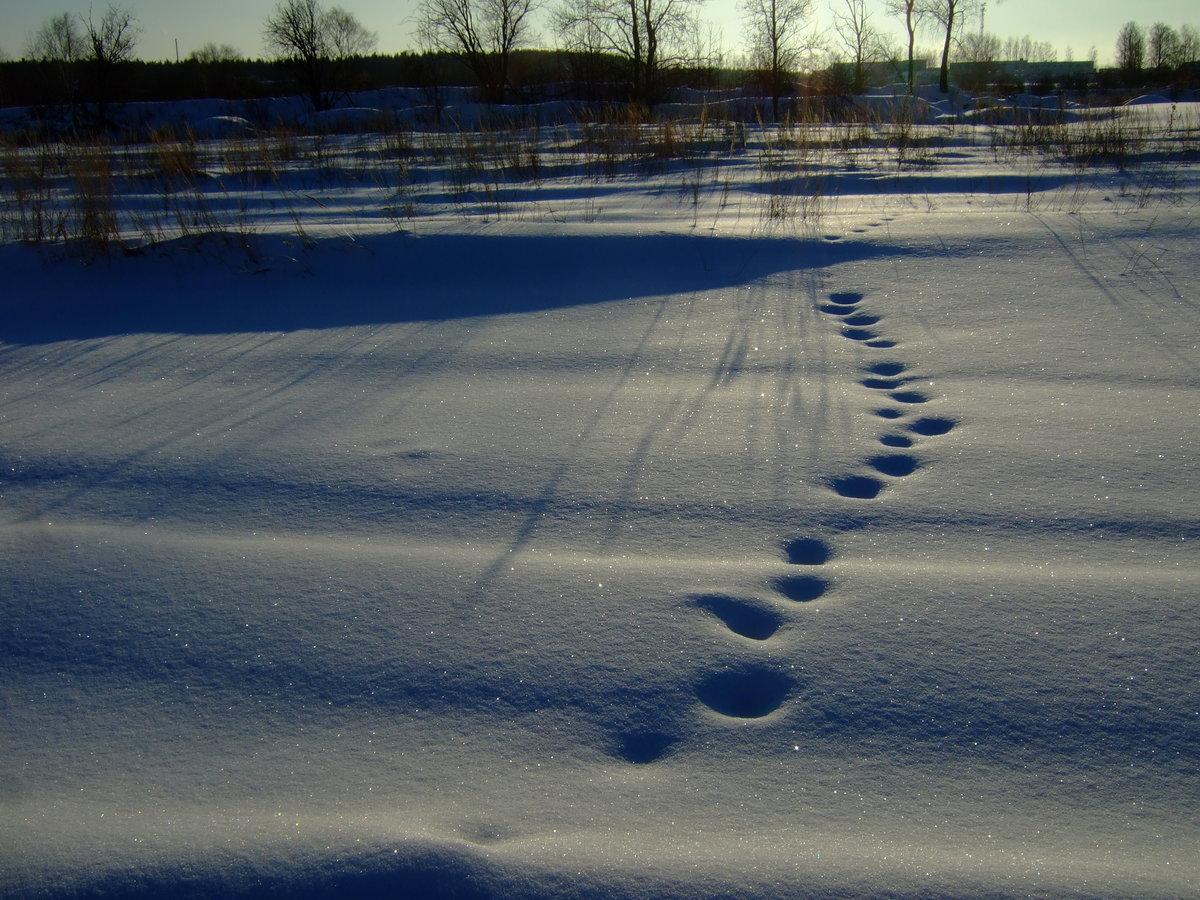 создать складной следы на снегу мужчины фото смородины