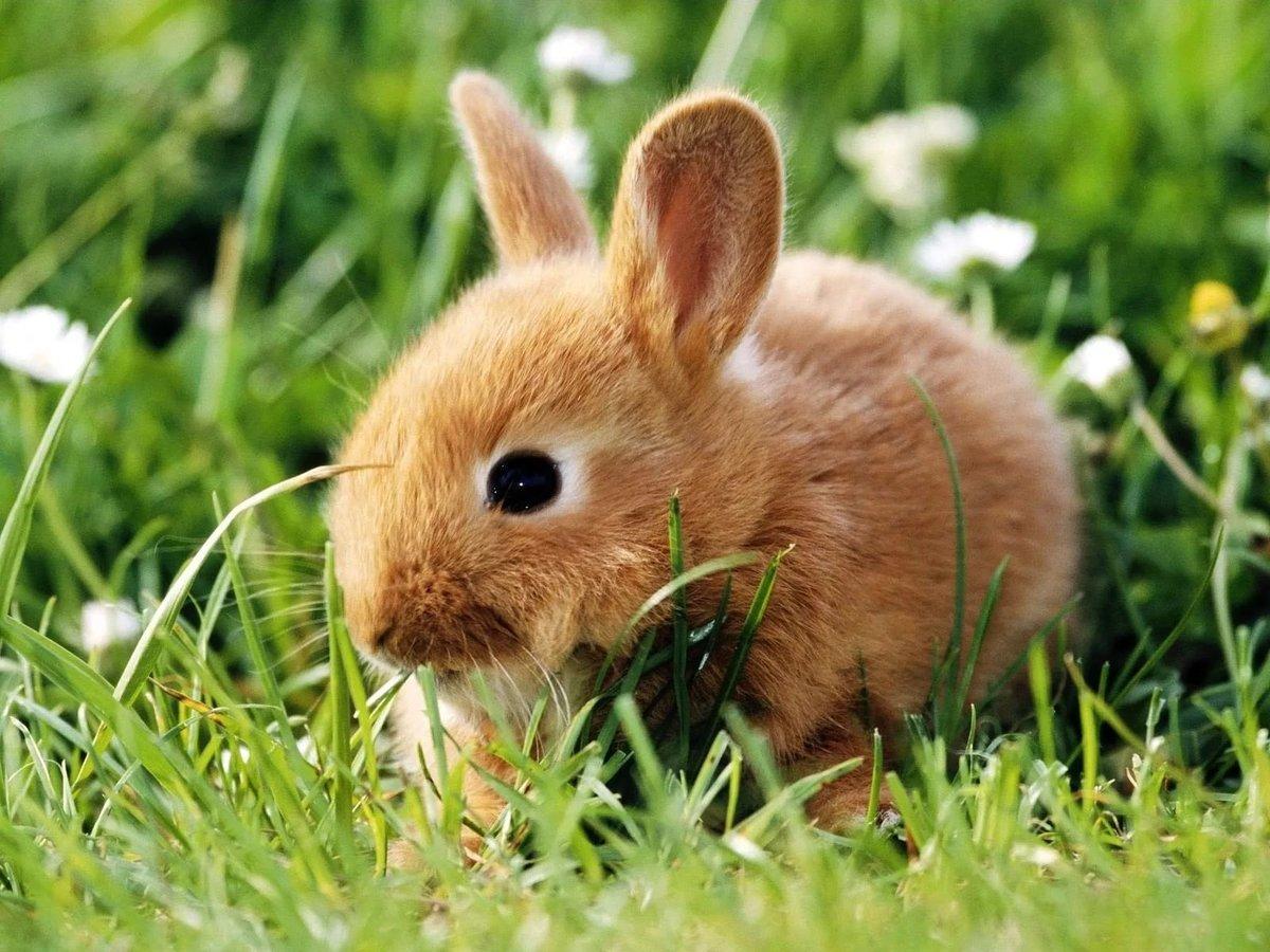 Картинки кроликов и зайчиков, цветы день