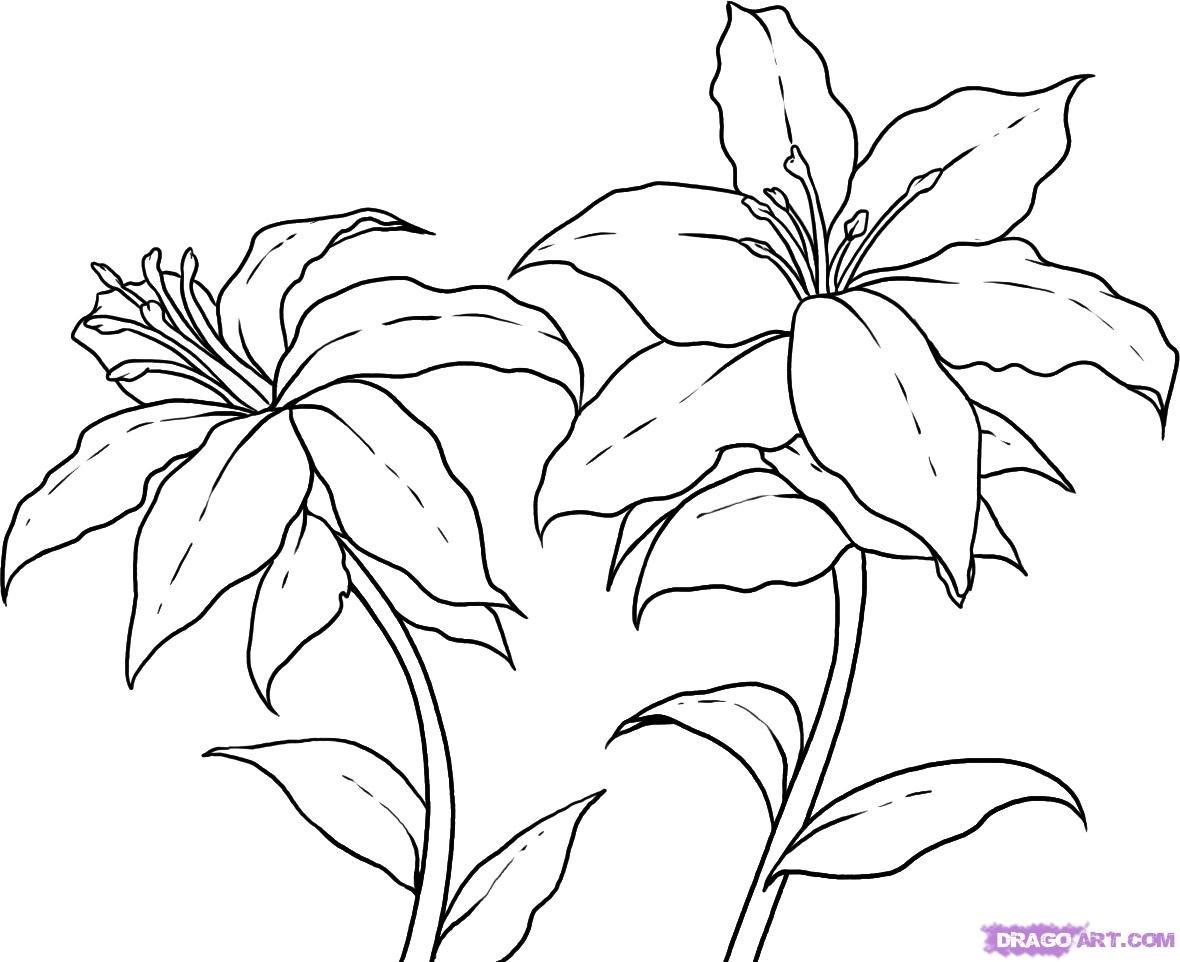 Цветы лилии как рисовать картинки