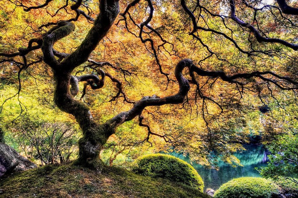 дерево життя фото сам