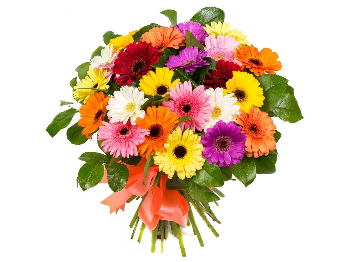 Яркие открытки цветы, мордашки картинки