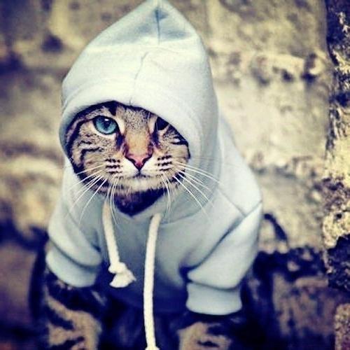 Прикольная картинка кота на аву, для яндекса
