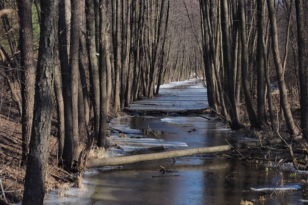 Картинки ручьи весной, картинки