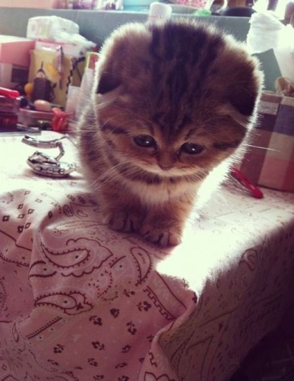 Самые смешные котики в мире до слез фото
