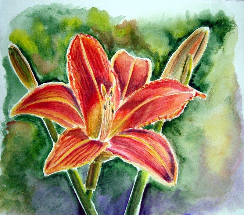 Лилии картинки красивые нарисованные, открытки своими руками