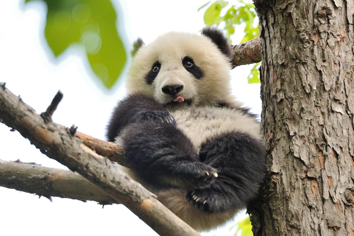 Открытки рождество, панда картинки приколы
