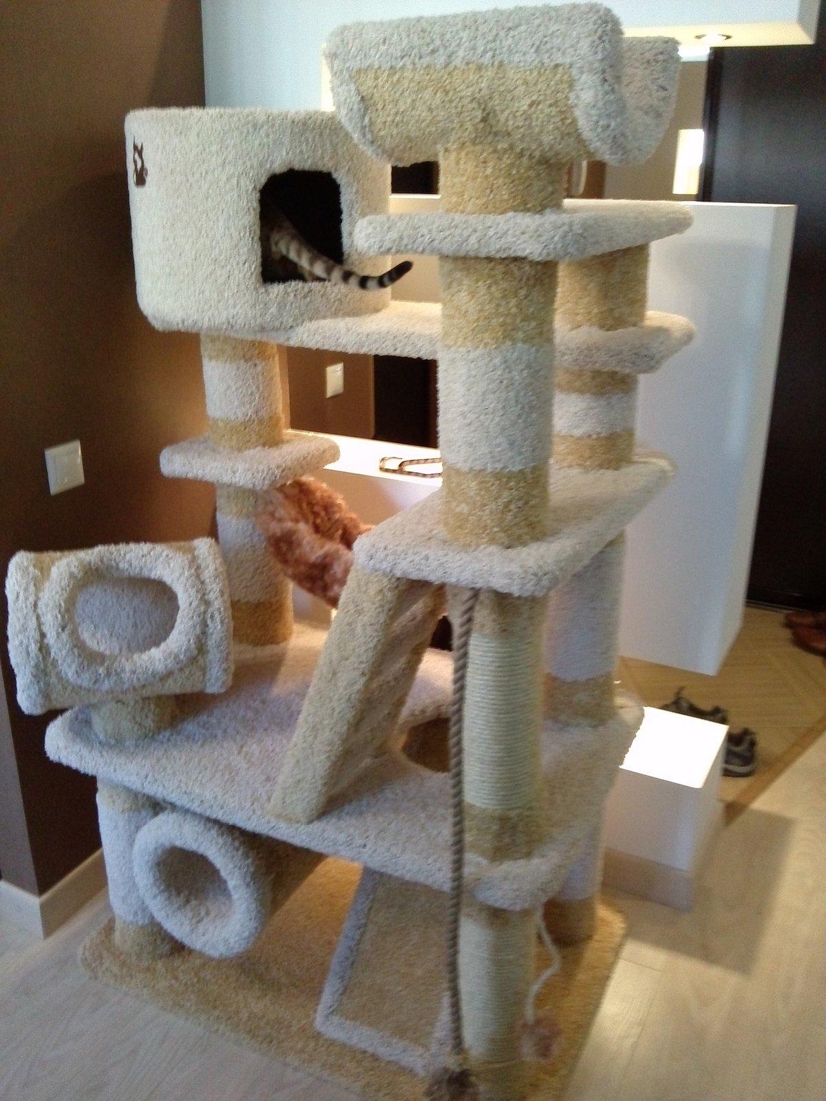 извержении кошачьи домики своими руками фото пантера отличается