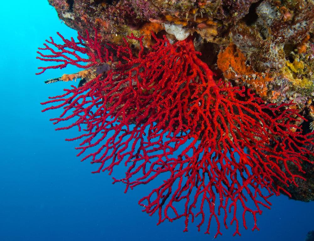 Прикольные картинки с кораллами