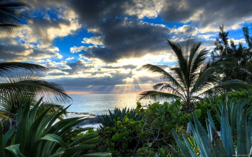 картинка море с пальмами большого разрешения фото, картинки обои