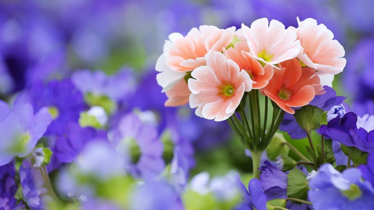 Картинки на рабочий стол полевые цветы самые красивые, для
