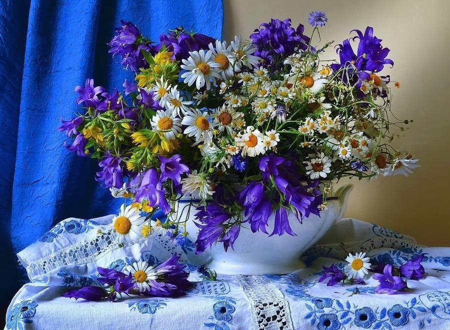 Картинки с красивыми полевыми цветами