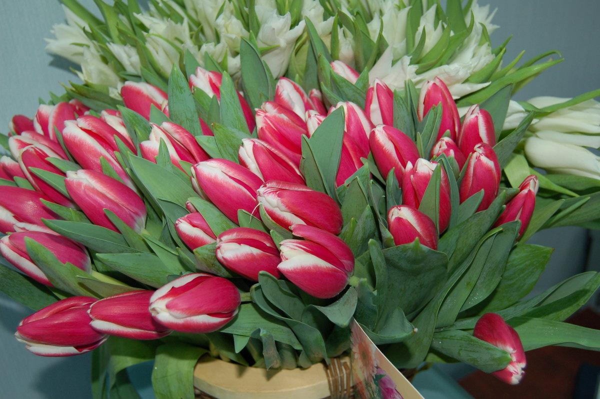 Картинки фотографии с розами красивыми букетами готова ваша