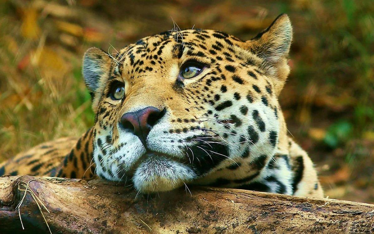 Картинки природа и животные красивые, своими руками