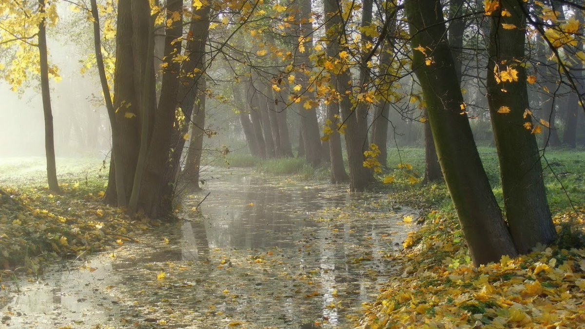 Картинки онлайн, картинки осень с дождем на рабочий