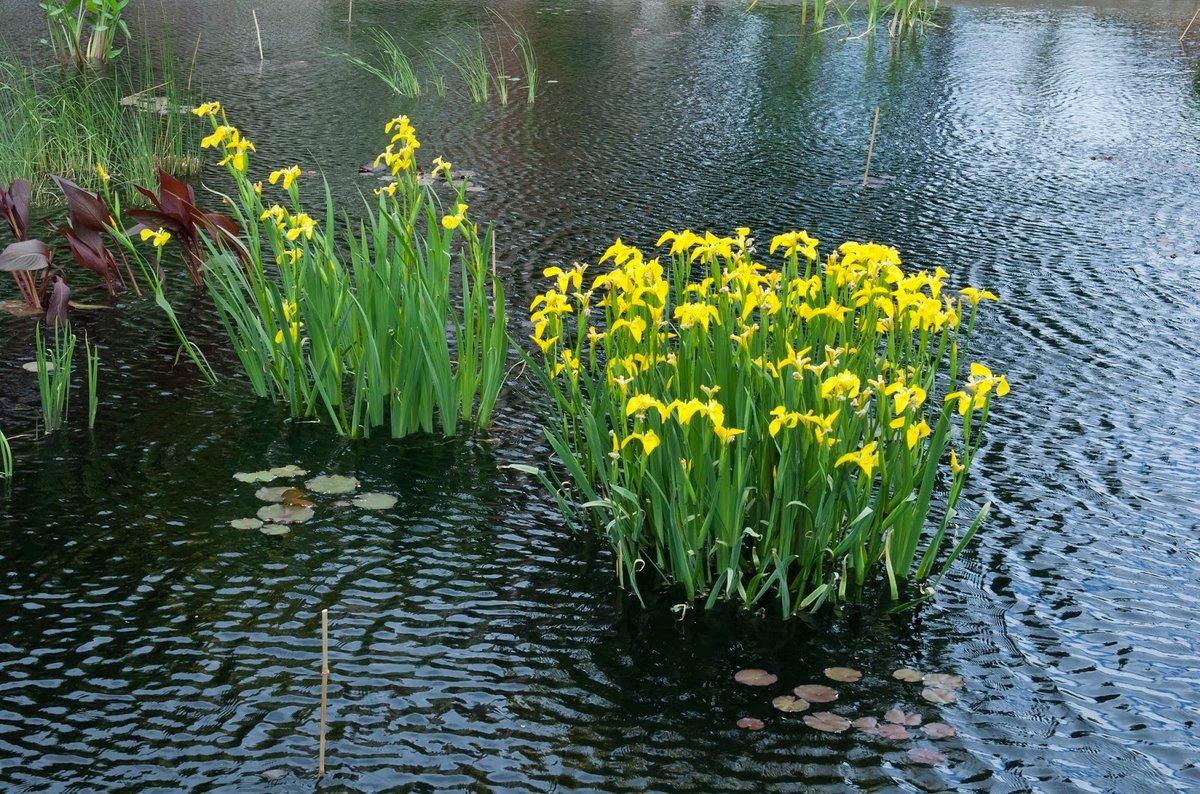 картинки в болотном цвете трех
