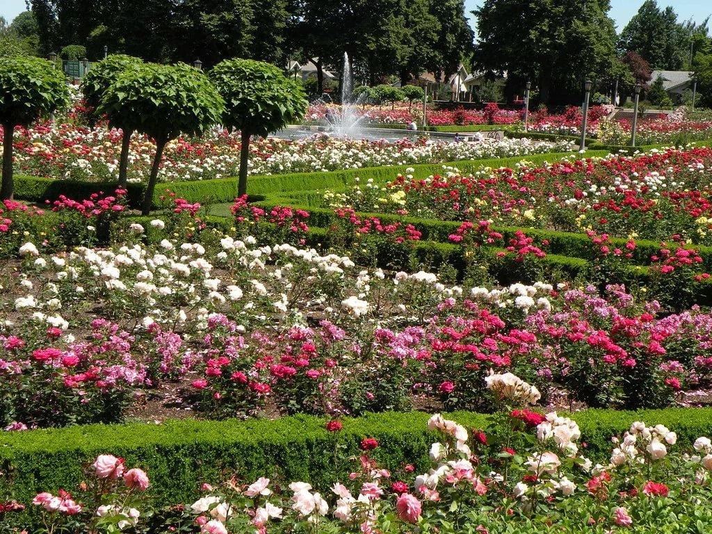 сад роз христа картинки здесь есть