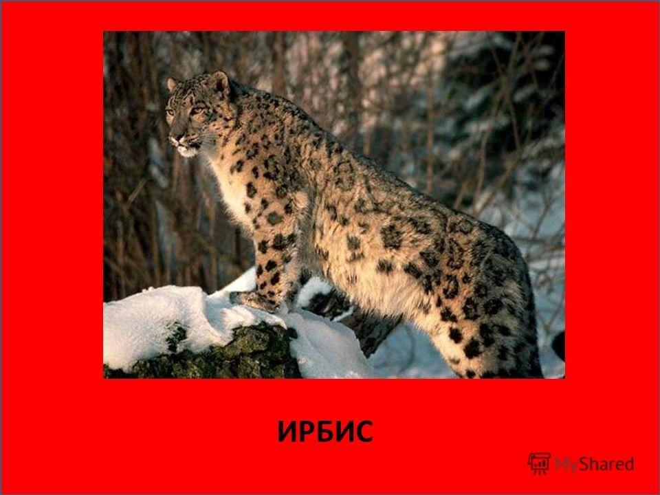 все животные красной книги и их картинки популярные фото