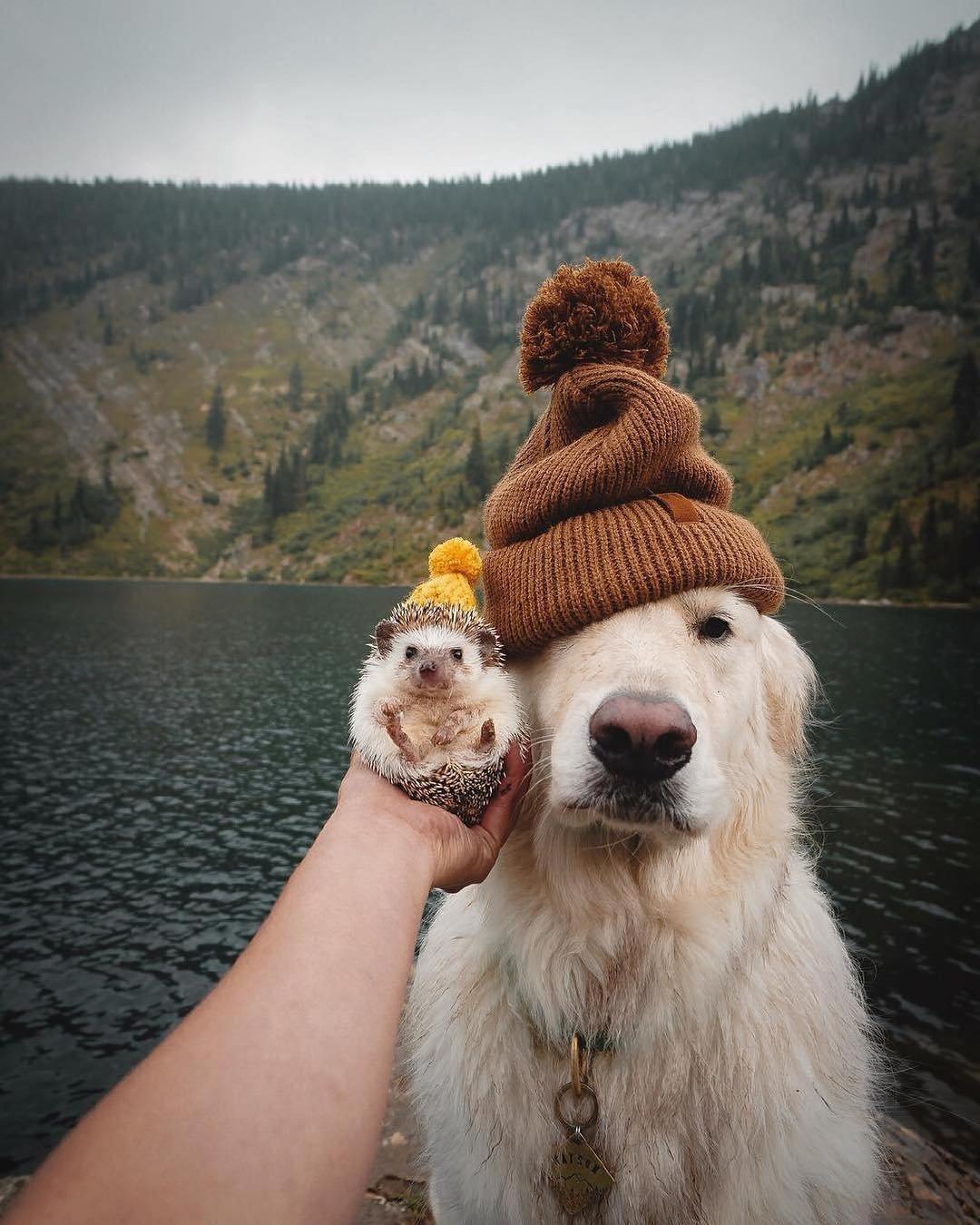 сапоги фото позитив животных про настроение надо