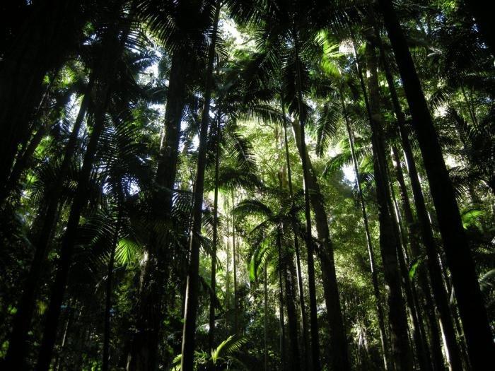 Картинки экваториальных лесов южной америки