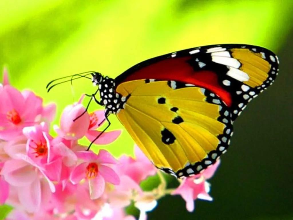 Надписью днем, открытки про бабочек