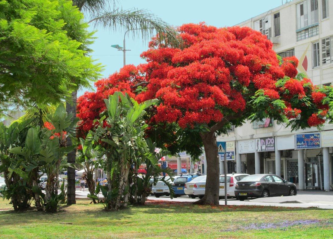 Экзотические деревья фото и названия