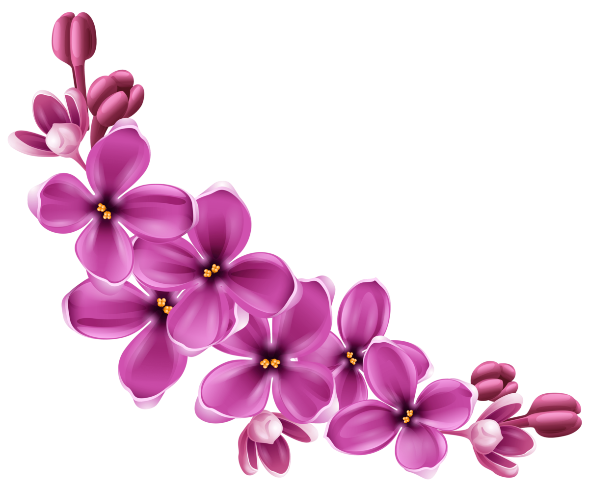 free clip art flowers transparent png clipart images free - HD4967×4131