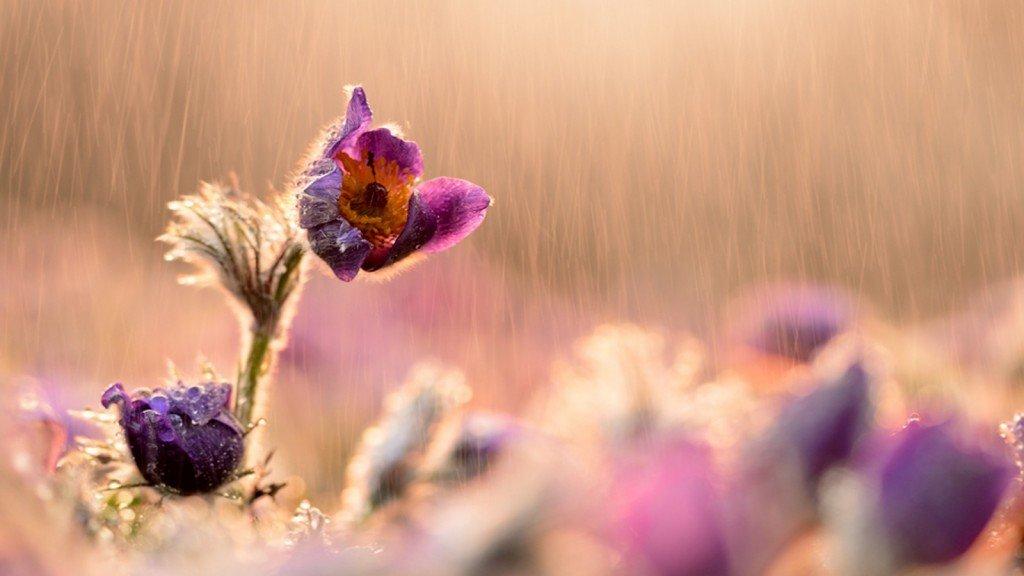 это цветы со смыслом фото знаю что написать