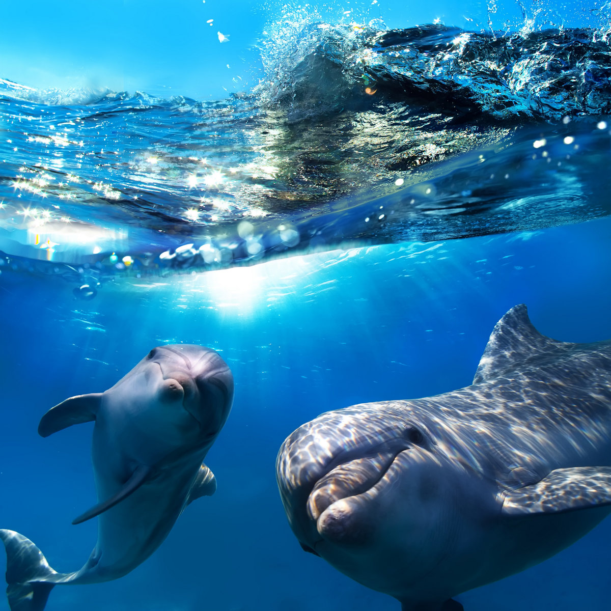 Картинки море и дельфины на телефон
