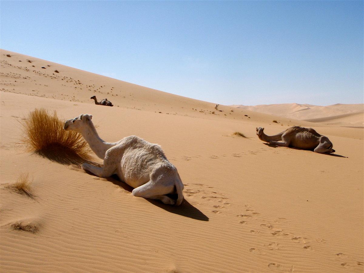Прикольные картинки пустыни