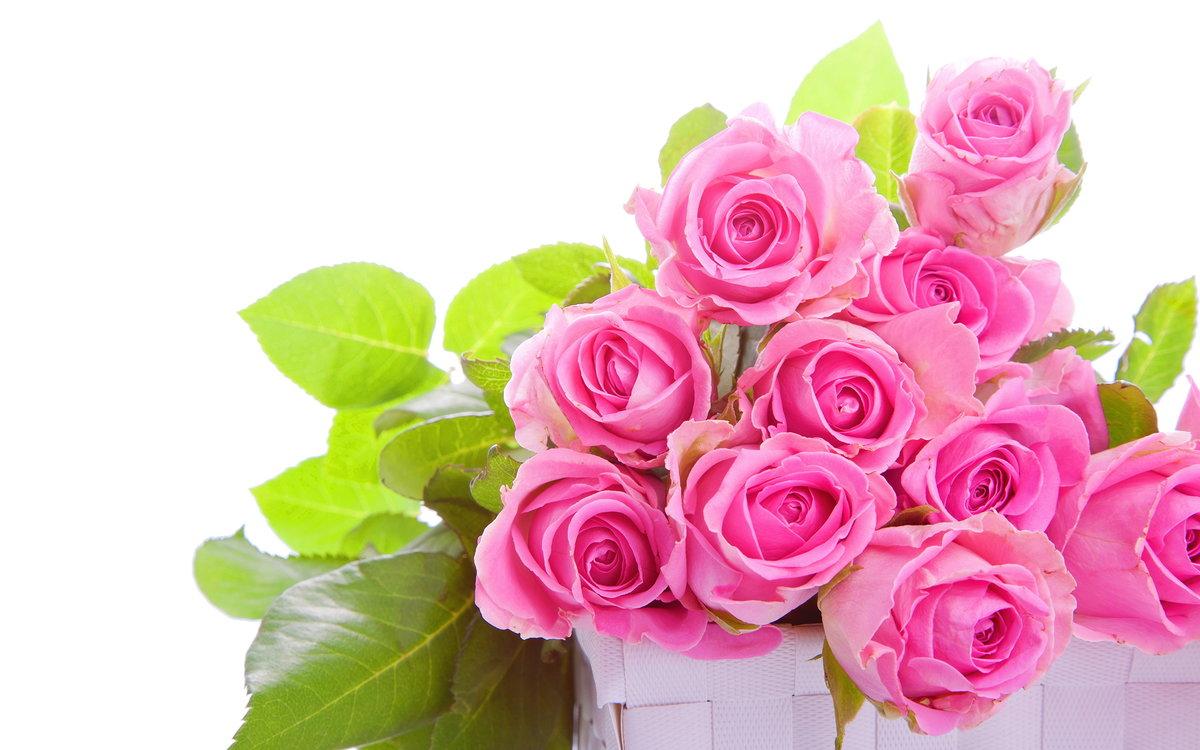 Открытки с днем рождения розы на белом фоне
