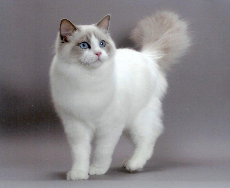 Картинки самых популярных котиков, про