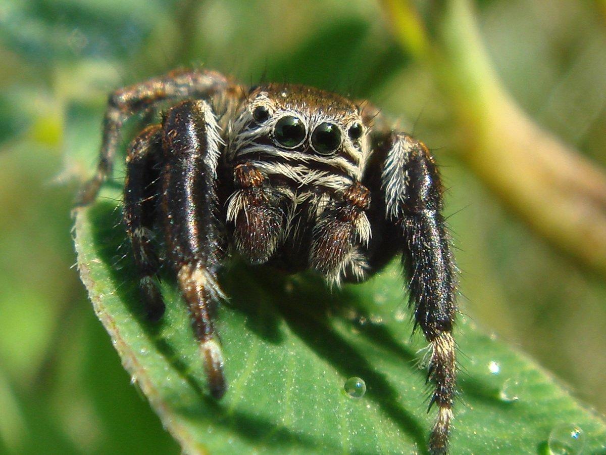 картинки о всяких пауков это еще