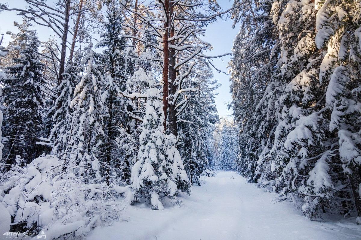 Фотки зимы в лесу