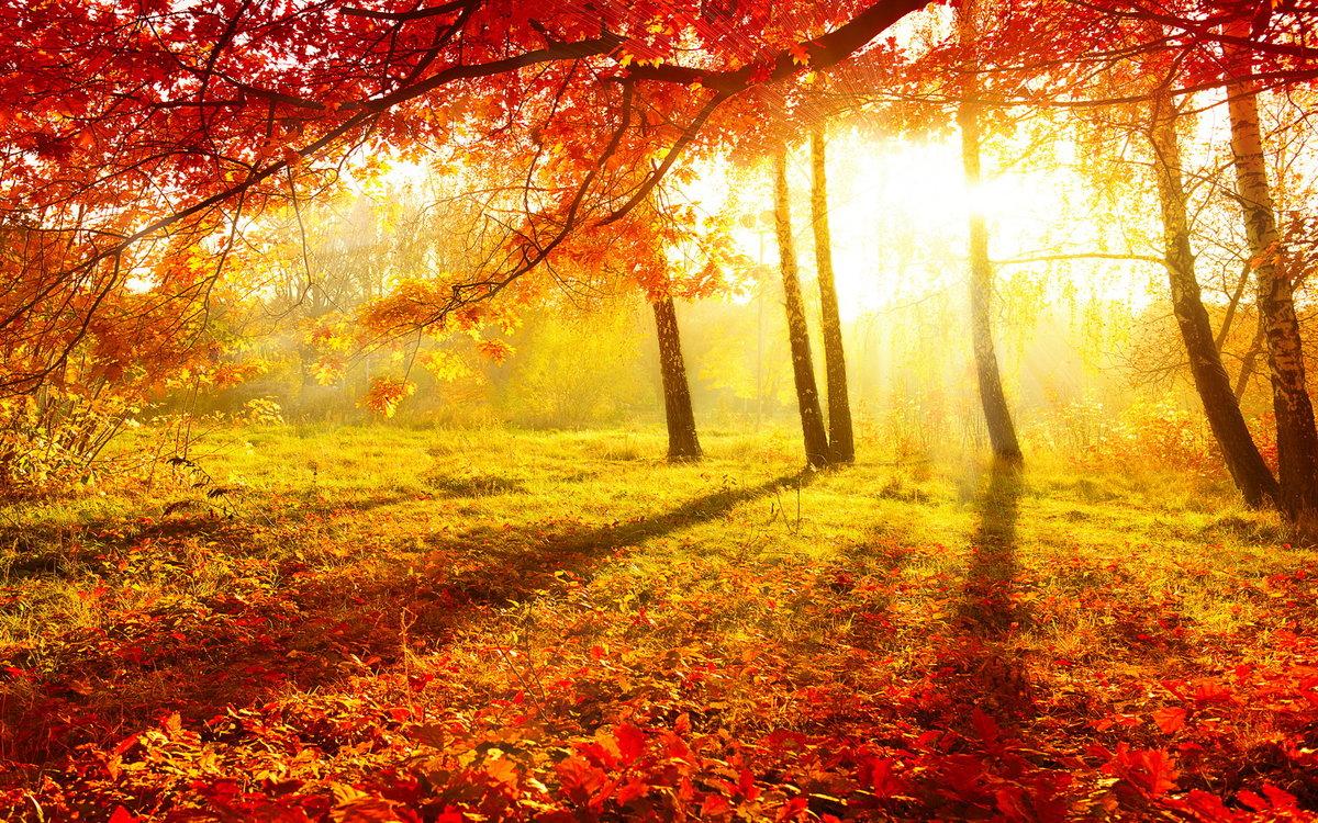 Что такое осень? Осень - это золотая пора . Когда начиеается дождь из листьев ( листопад ) . Когда начинается школьные годы . Осенью можно встретить одногласников , учителей , педагогав и однакурсников , однагруппников . В это осенее время можно увидеть золотой кавёр .